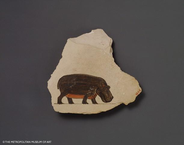hippo-2.jpg